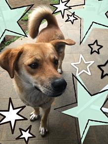 my dogの画像(DOGに関連した画像)