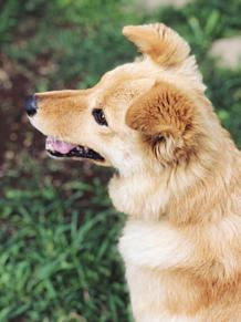 my dearの画像(DOGに関連した画像)