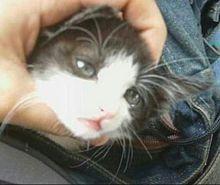 美しすぎる猫 プリ画像