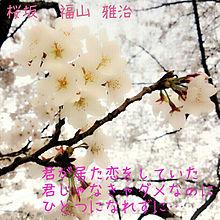 歌詞 桜坂