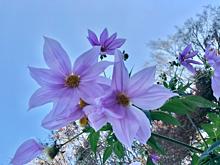 素材の画像(花に関連した画像)