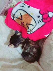 かぎしっぽの三毛猫ちゃん♡♡の画像(靴に関連した画像)
