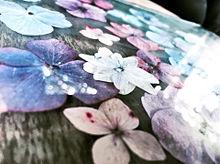 紫陽花の画像(おしゃれ/シンプルに関連した画像)