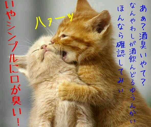 gato lindo gostoso foto: