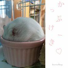 カップケーキの画像(雪見だいふく ハムスターに関連した画像)