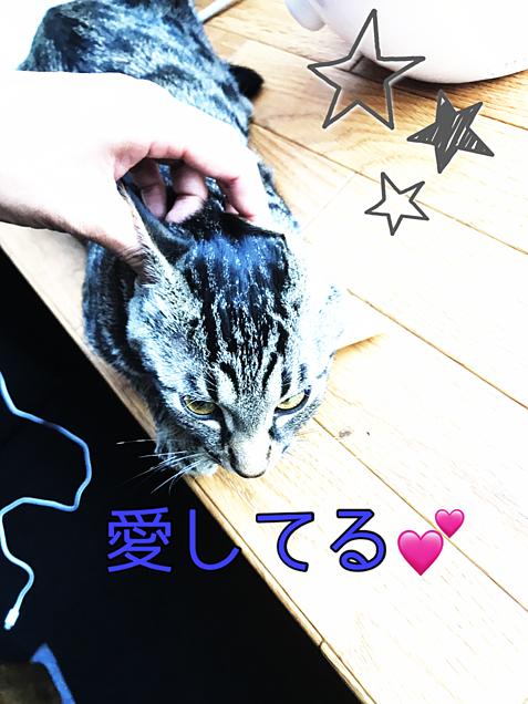 猫ちゃんの画像 プリ画像