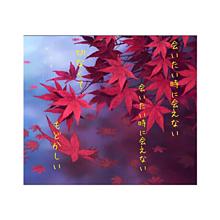 渡月橋の画像(倉木麻衣に関連した画像)