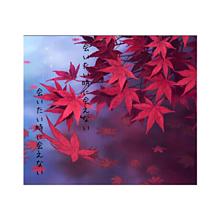 倉木麻衣の画像(倉木麻衣に関連した画像)