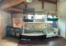 うちの鳥部屋 プリ画像