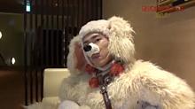 宮舘涼太 犬の画像(犬 おしゃれに関連した画像)