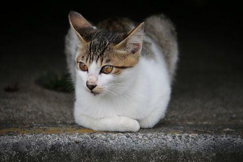子猫の画像(プリ画像)