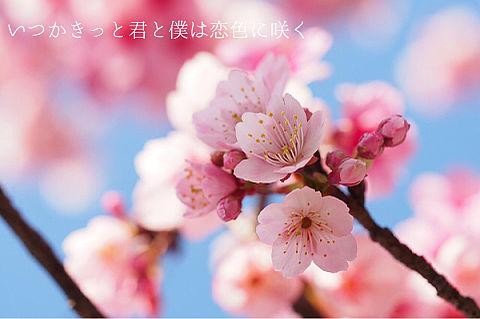 恋色に咲けの画像 プリ画像