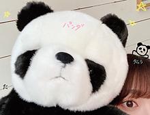 田村保乃の画像(可愛い パンダに関連した画像)