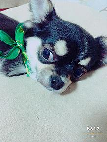 かわいい犬 プリ画像