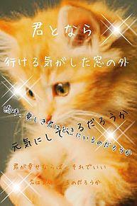 とある猫の駆け落ち物語 プリ画像