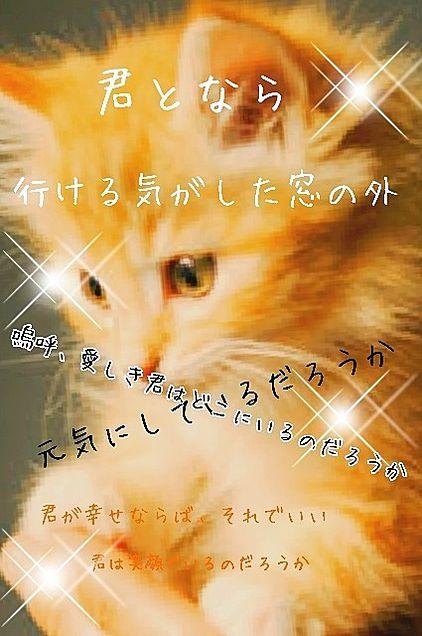 とある猫の駆け落ち物語の画像 プリ画像