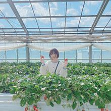 @小豆の画像(パオパオチャンネルに関連した画像)
