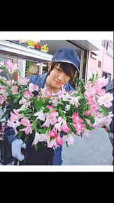 アルジャーノンに花束を プリ画像