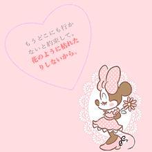 花の画像(SHISHAMOに関連した画像)