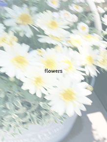 白い花 プリ画像