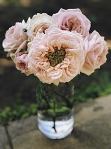 roses プリ画像