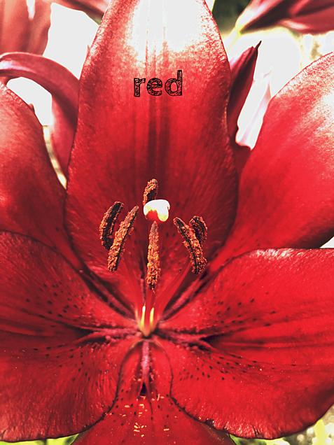 redの画像(プリ画像)