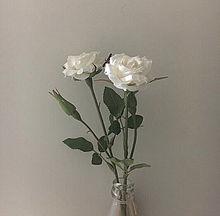 黒 白 かっこいい かわいい 薔薇 バラ おしゃれ 女の子の画像(女の子に関連した画像)