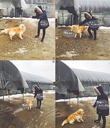 ジンくんと犬とヌナ プリ画像