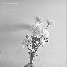 花の画像(#片思いに関連した画像)