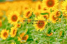 花の画像(Mr.Childrenに関連した画像)