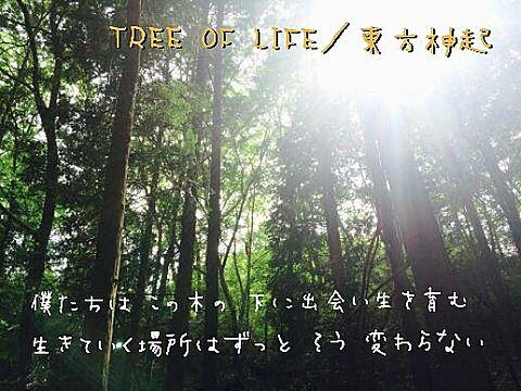 TREE OF LIFEの画像(プリ画像)