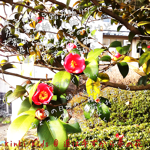 KinKi Kids 道は手ずから夢の花の画像 プリ画像