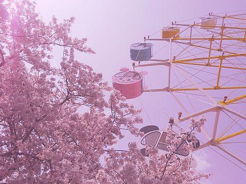 観覧車と桜の画像(プリ画像)