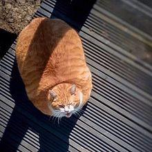 動物達が可愛い件の画像(プリ画像)