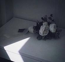roseの画像(蝉に関連した画像)