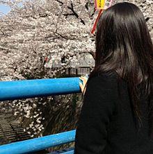 miwaの画像(目黒川に関連した画像)