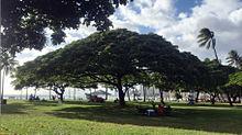 Hawaii ♡→保存の画像(プリ画像)