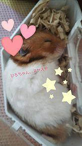 スヤスヤの画像(睡眠に関連した画像)