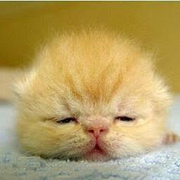 うさぎ ハムスター 犬 猫の画像23点 完全無料画像検索のプリ画像 Bygmo