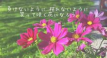 Mr.Children  花 プリ画像