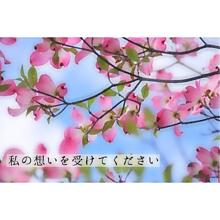 保存→いいねの画像(ハナミズキに関連した画像)
