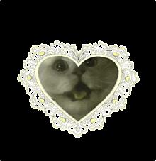 ⌯' ▾ '⌯ 猫  🟡 ♡&フォローで保存OKの画像(量産型顔隠しに関連した画像)
