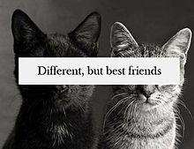 Different,but best friendsの画像(猫 おしゃれに関連した画像)
