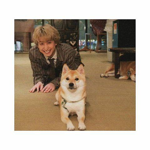 佐久間さんと犬🐶の画像 プリ画像