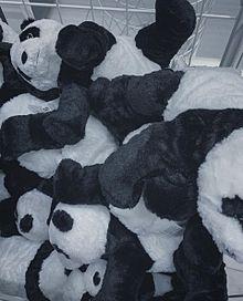 ぱんだいっぱいの画像(可愛い パンダに関連した画像)