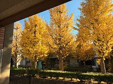 秋の画像(秋 素材に関連した画像)