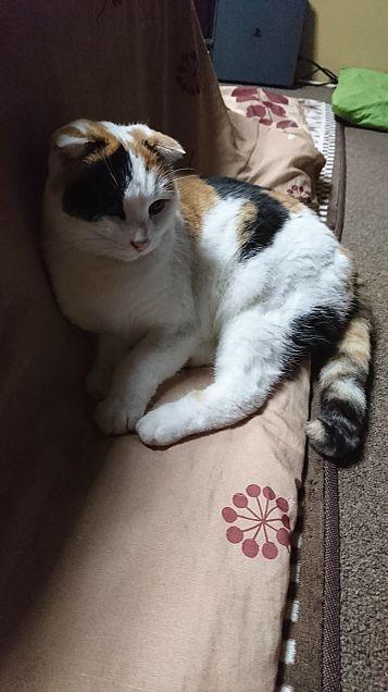 うちの猫のれな〜の画像(プリ画像)