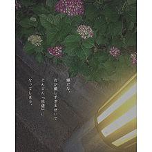 no titleの画像(ワガママに関連した画像)