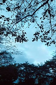 木漏れ日空。の画像(木漏れ日に関連した画像)