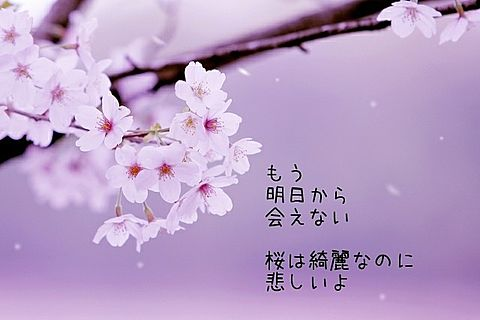 悲しい春の画像(プリ画像)